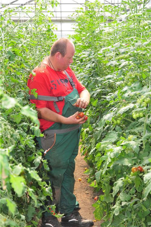 Gartenbau Augsburg arbeiten im gartenbau caritas augsburg betriebsträger ggmbh