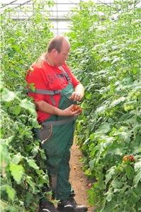 Arbeiten im gartenbau - Gartenbau augsburg ...